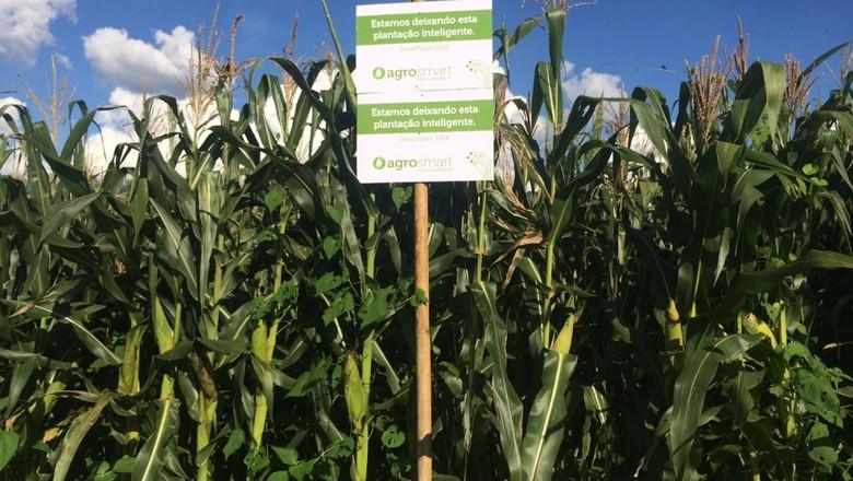 plantação_agrosmart (Foto: Mysalomon)