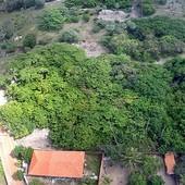 Piauí quer derrubar RN com cajueiro gigante (PI quer derrubar RN com maior cajueiro do mundo (Reprodução/TV Clube))