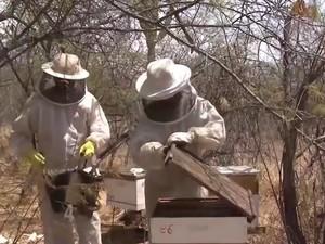 Criação de abelhas (Foto: Reprodução/TV Bahia)