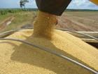 Produtores de grãos querem posição de destaque no agronegócio mundial