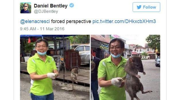"""Em sua conta no Twitter, @DJBentley mostra um colega fazendo uma """"perspectiva forçada"""" com um rato. (Foto: BBC)"""