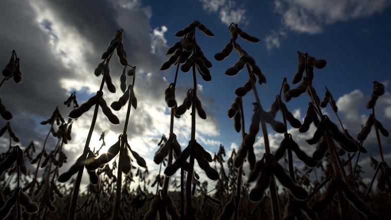 agricultura-soja-safrinha-campo (Foto: Emiliano Capozoli/Ed. Globo)
