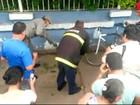 Resgate de cobra em árvore perto de escola mobiliza bombeiros no RS