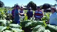 Agricultores recebem treinamento para diminuir riscos da produção de tabaco
