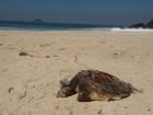 Tartaruga é encontrada morta na praia de São Conrado, na Zona Sul
