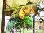 Giovanna Ewbank e Bruno Gagliasso curtem viagem à Itália e mostram fotos