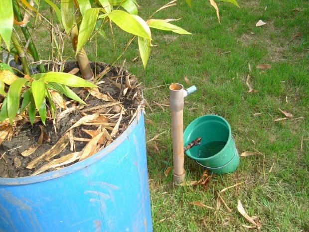 Bambu é opção para ajudar no tratamento de esgoto em Goiás (Foto: Eurivan Alves Mendonça/Arquivo Pessoal)