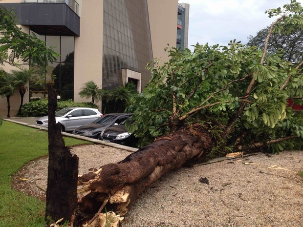 Árvore cai na Nelson D´Ávila durante a chuva (Foto: Marcel Amar Rio/Vanguarda Repórter)