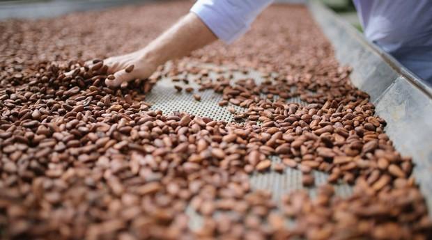 5.Ao sol: depois da separação da polpa, a semente precisa secar ao sol, no processo que dura até 10 dias nas chamadas barcaças (Foto: Divulgação/Ana Lee)