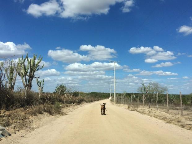 Animais também são afetados pela seca no semiárido da Bahia (Foto: Henrique Mendes / G1)