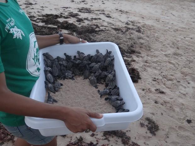 Voluntária cerraga filhotes de tartaruga para serem soltos no mar (Foto: Fabiana De Mutiis/G1)