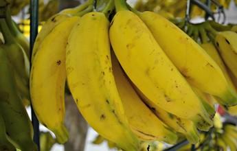 Dia da banana: fruta gera energia para o treino e tem vitaminas e carboidratos