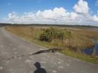 Ciclista se depara com jacaré no meio de estrada na Flórida