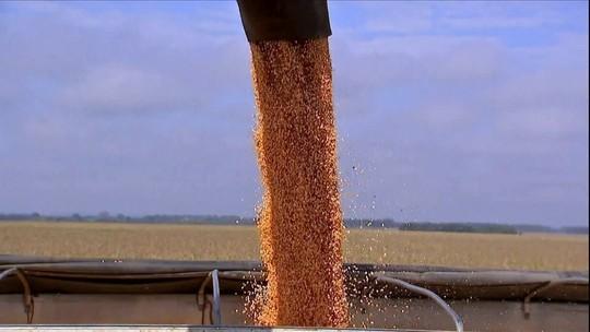 Expectativa é que produção do milho safrinha no MS cresça mais de 50%