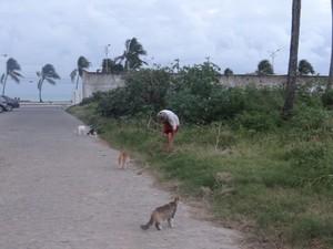 Dona Socorro alimenta e medica dezenas de gatos nas ruas do bairro do Prado, em Maceió. (Foto: Fabiana De Mutiis/G1)