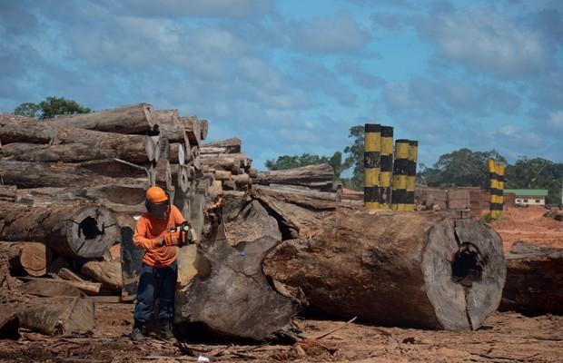 Brasil;Meio Ambiente;Amazônia;cuidado  Depois de retiradas da mata, as árvores são cortadas, tratadas e armazenadas no pátio da serraria. A operação demanda 350 homens  (Foto: Odair Leal)