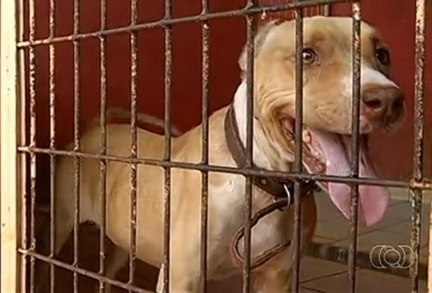 cadela abandonada em Itumbiara (Foto: Reprodução/ TV Anhanguera)
