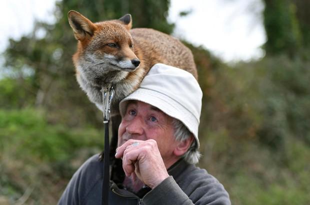 Irlandês Patsy Gibbons cuida das raposas desde que as encontrou abandonadas ainda filhotes (Foto: Clodagh Kilcoyne/Reuters)