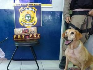 Cachorro ajudou na identificação da droga (Foto: Divulgação/PRF)