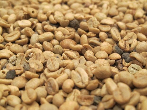 Grãos que dão origem a bebida café (Foto: Mariane Rossi/G1)