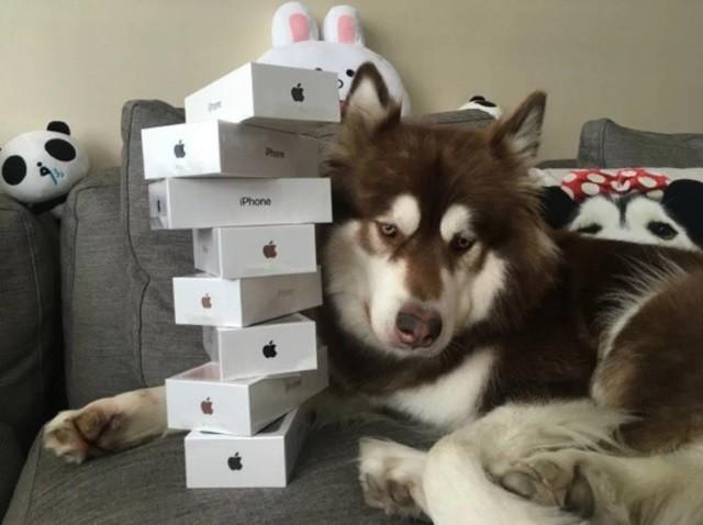 Coco e os seus iPhones