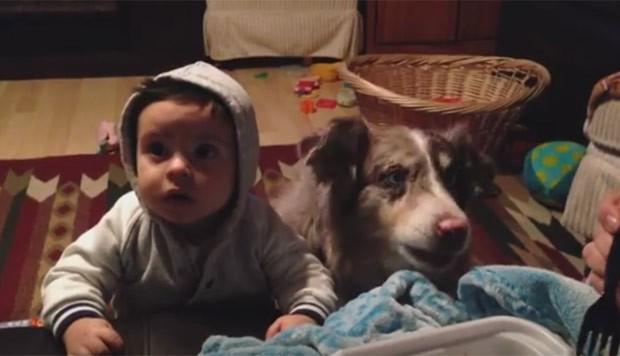Cão 'furou' bebê ao 'falar' mamãe para a dona (Foto: Reprodução/YouTube/Sam Giovanini)