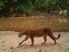 Censo de animais em reserva do Acre ajuda a combater caça na região