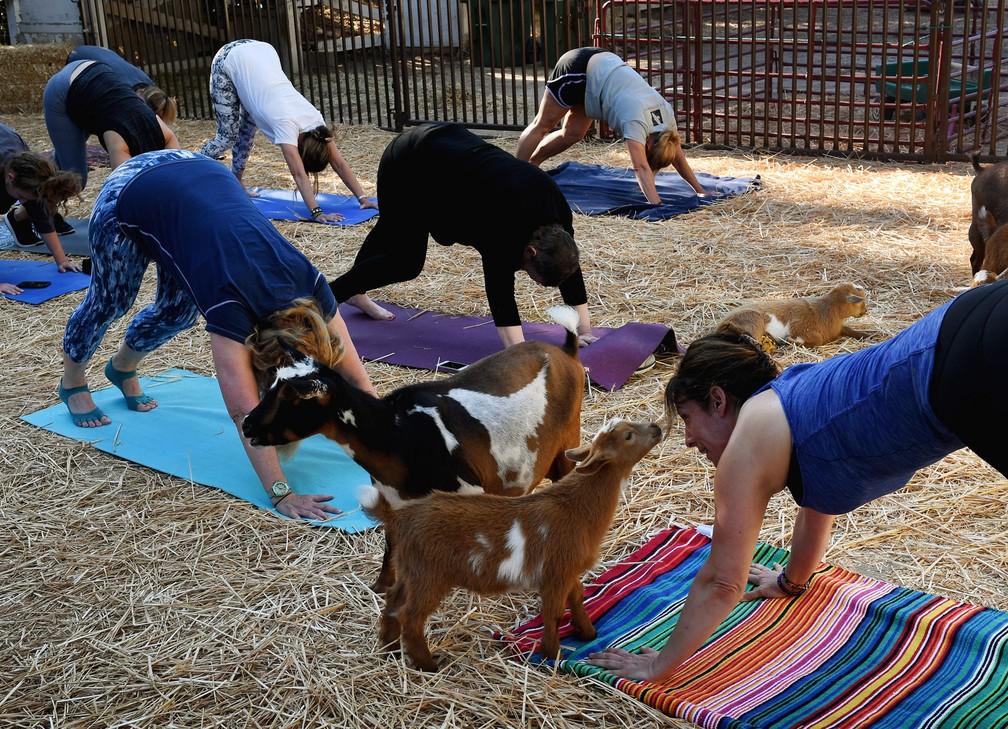 Cabras passeiam entre praticantes de ioga durante aula em fazenda  (Foto: Mark Ralston/AFP)