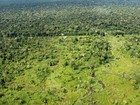 No AM, workshop do Inpa vai discutir  sobre desmatamento de florestas