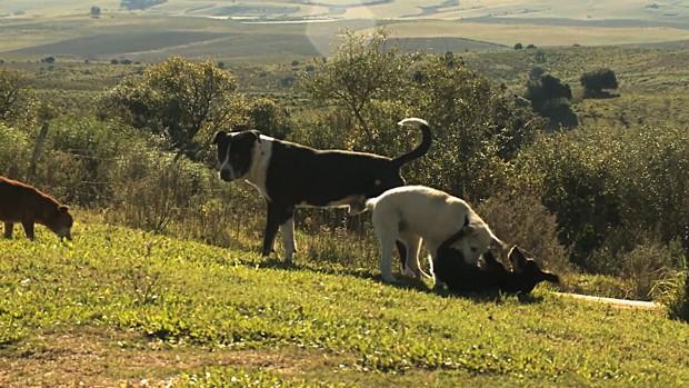 Mais de cem animais de estimação morreram no último mês em Aceguá (Foto: Reprodução/RBS TV)