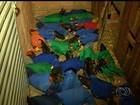 Polícia detém idoso por realizar rinha de galo e resgata aves, em Jataí