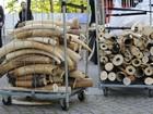 Bélgica destrói 1,5 tonelada de marfim apreendida em 25 anos