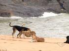 Moradores e turistas reclamam de cachorros abandonados, no ES