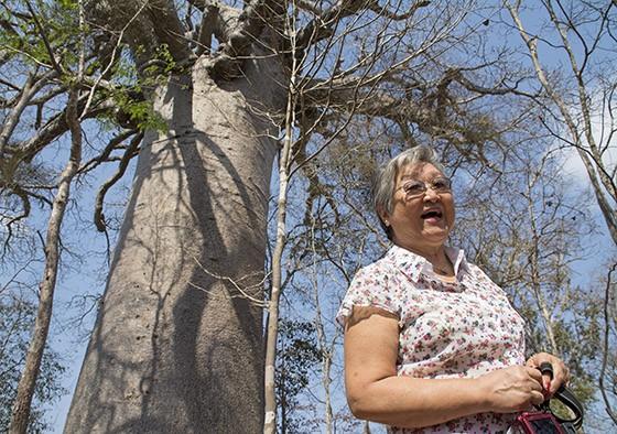 No oeste de Madagascar, Mitiko aos pés do colossal Baobá Sagrado, uma árvore venerada pelos locais (Foto: © Haroldo Castro/Época)