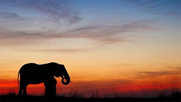 O zimbabuano Brendon Cremer mostra a silhueta dos maiores e principais animais de parques ecológicos africanos em suas fotos (Foto: Caters)