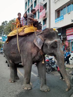 Tábata em seu primeiro passeio de elefoa, o nome dela é Rani (rainha) (Foto: Arquivo pessoal)