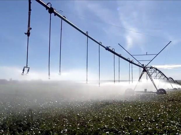 Estudo da Esalq, campus da USP em Piracicaba vai nortear Plano Nacional de Irrigação (Foto: Reprodução/TV Globo)