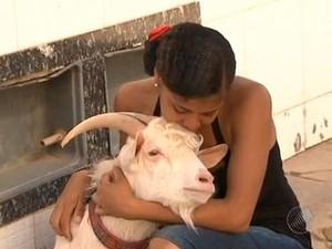 Fabiana cria o bode há um ano e dois meses (Foto: Imagens / TV Bahia)