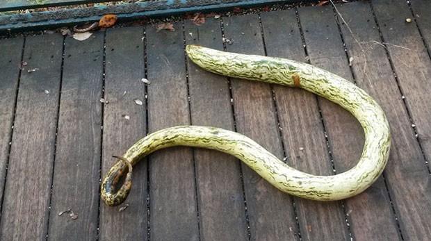 Bombeiros austríaco tentam capturar cobra enorme, mas acham abóbora (Foto: Reprodução/Facebook/FF Steyr)