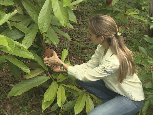 Engenheira agrônoma prevê queda na produção do cupuaçu por causa de pragas (Foto: Reprodução/TV Rondônia)