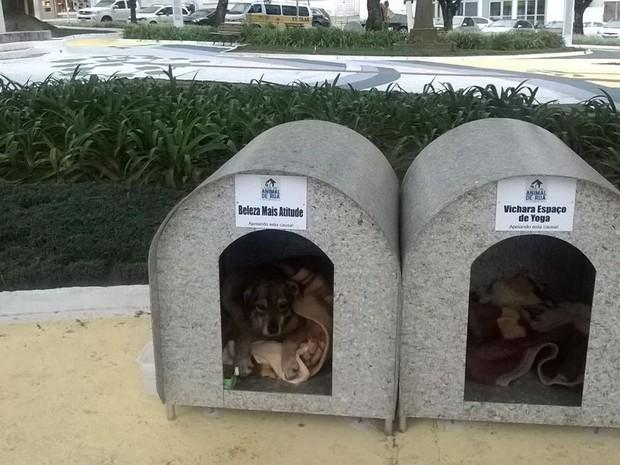 500 casinhas serão instaladas nos 71 bairros da cidade (Foto: Bruna Uncini/Divulgação)