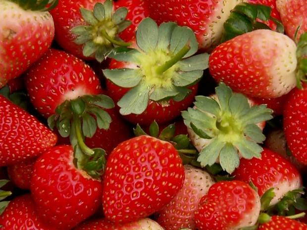 Especialistas dizem que nova variedade de morango é mais vermelha, saborosa e resistente. (Foto: Reprodução EPTV)