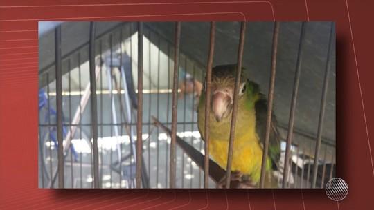 Animais são apreendidos e homem é preso em operação no norte da BA