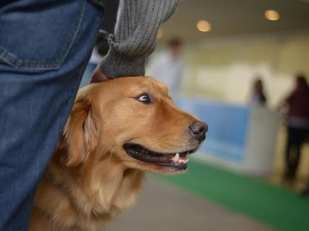"""Testes feitos entre humanos e cães de pelúcia provocaram a """"ira"""" de cachorros analisados por cientistas (Foto: Marcelo Brandt/G1)"""