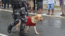Cães auxiliam no trabalho da Polícia Militar (Felipe Ramos/G1)