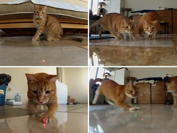 Câmera mostra os gatos durante perseguição implacável ao laser (Foto: Reprodução)