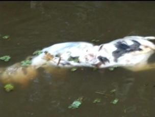Cachorros mortos foram encontrados no rio da cidade. (Foto: Reprodução/ Aragonei Bandeira)