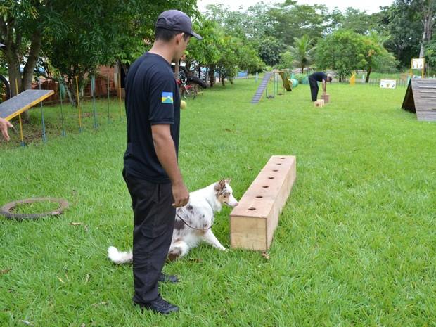 Os animais são treinados para farejarem drogas dos mais diversos tipos e em diferentes locais.  (Foto: Magda Oliveira/G1)