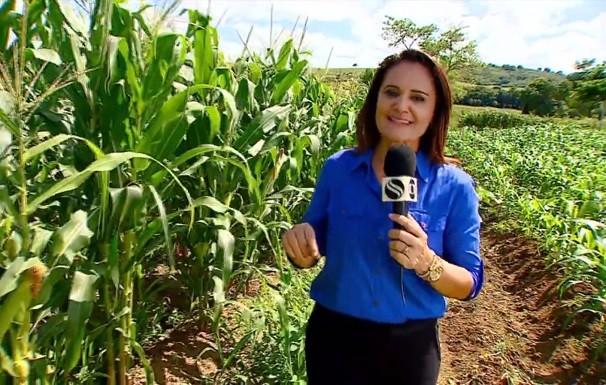 Reportagem de Carla Suzanne falou sobre produção de milho verde no estado (Foto: Divulgação/TV Sergipe)
