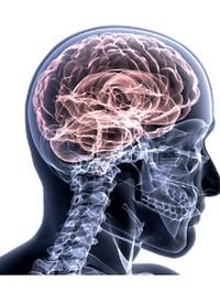 Exercícios físicos melhoram a atividade do cérebro